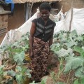 Alice Atieno attends to her vegetables, right on the doorstep of her shanty in Kibera slum. Credit: Miriam Gathigah/IPS