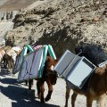 Mules carry a solar energy system to a remote region in the Himalayan desert region of Ladakh. Credit: Athar Parvaiz/IPS.
