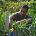 Erle Rahaman-Noronha cosecha la producción de su establecimiento agrícola. Crédito: Mark Olalde/IPS