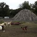 Los hornos de tierra son el método más usado para hacer carbón vegetal en Cuba, como el elaborado en la Ciénaga de Zapata, en las cercanías de la oriental localidad de Playa Girón. Crédito: Jorge Luis Baños/IPS